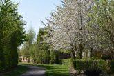 Spring on Southern Shelter belt 2